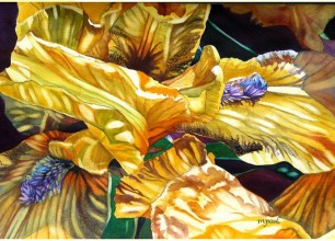 #155- s Yellow Iris'