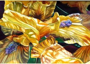 """#155- s Yellow Iris'  28""""w x 22""""h, framed size  $650"""